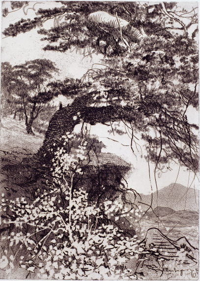 Pine Tree, 1962, Etching, 49×34.5cm