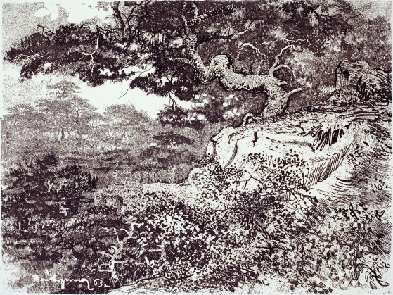 Pine tree on the Rock, 1963, Etching, 36.6×48.7cm