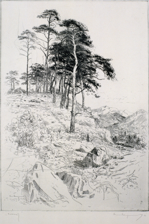 Pine Tree, 1971, Etching, 49.7×34.6cm