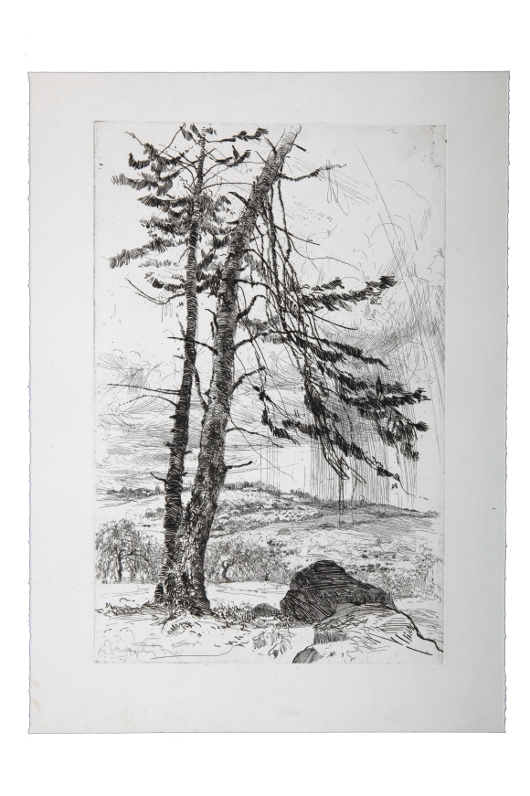 The Fir, 1980, Etching, 48.8×32cm