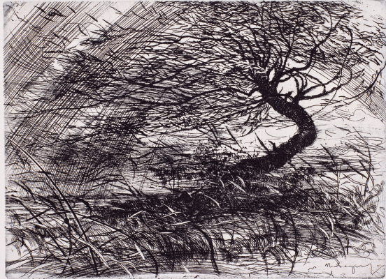 Rain (Willow), 1971, Etching, 18×24.3cm