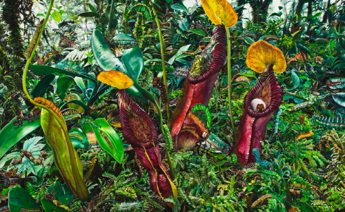 100 caterpillars with nepenthes 2011  Oil on canvas 130x210cm