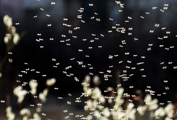 The Flapping of Mayflies, 2011, Pigment print, 50.6x70cm